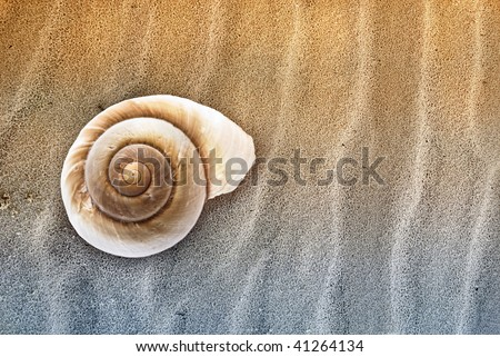 Abstract image of Seashell in the sand.