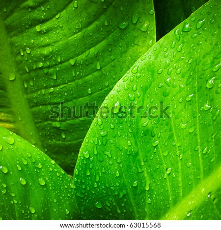 Abstract image of water drop on  leaves in nature - stock photo