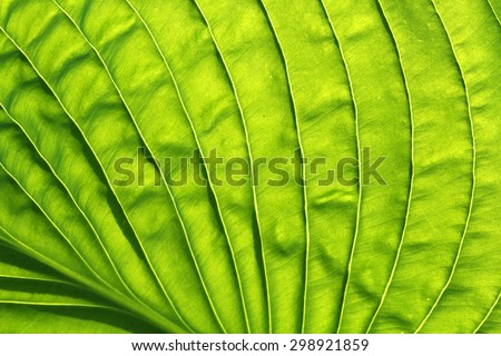 abstract leaf texture. - stock photo