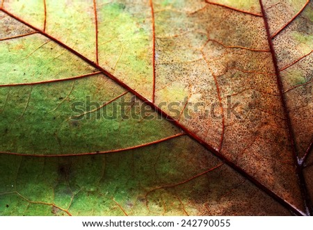 Abstract leaf texture for background  - stock photo