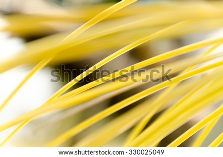 Abstract Line of Nature Yellow Line Blurred Background Texture - stock photo