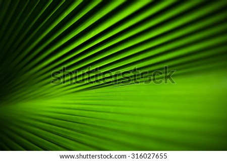 Abstract line texture of green palm leaf. Shallow DOF - stock photo
