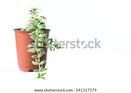 Abstract Little plant in a pot isolated on white background. Picture space for add text. - stock photo