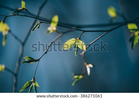 Abstract macro close up shot of tree leaves and buds. Back light and short depth of field. Selective focus. Creamy background. - stock photo