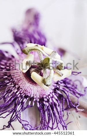 Abstract macro of a Passion Flower with an extreme shallow depth of field. - stock photo
