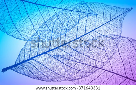Abstract macro photo of plant's leaves - stock photo