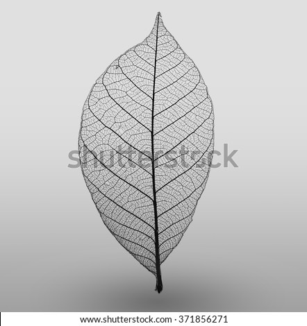 Abstract macro photo of plant's leaves. Black and white. Minimalism. - stock photo