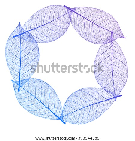 Abstract macro photo of plant's leaves isolated over white background shaped in frame
