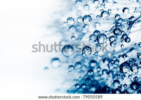 Abstract macro photo of plant seeds with water drops. - stock photo
