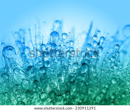 Abstract macro photo of plant seeds with water drops. Watercolor stylization.  - stock photo