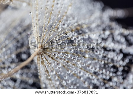 Abstract macro photo. Water drops on a plant's seed. Shallow deep of field.