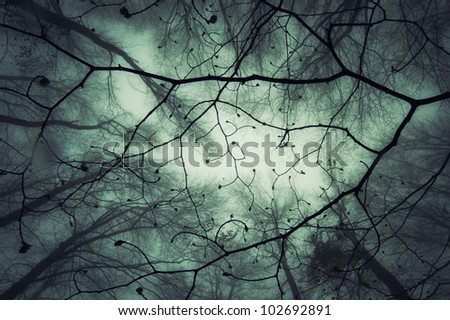 abstract magical forest - stock photo