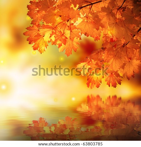 Abstract Maple Reflection - stock photo
