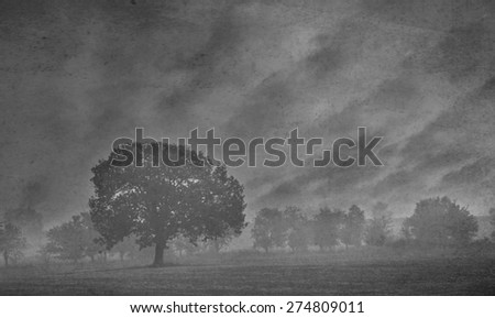 abstract misty textured dark forest  - stock photo