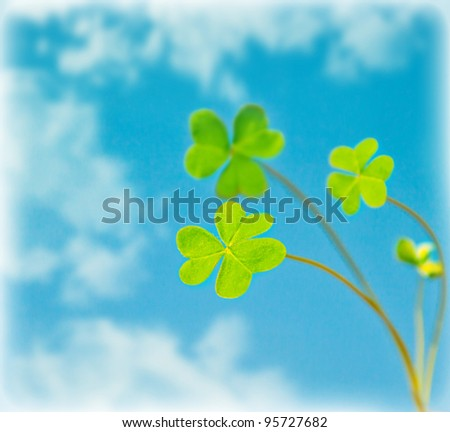 Abstract natural background, clover over sky, fresh green spring plant in blue sky, floral border, st.Patrick's day, holiday luck symbol - stock photo