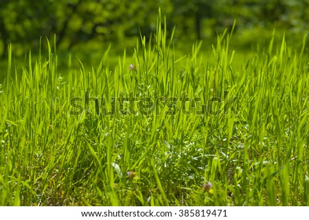 Abstract natural backgrounds - stock photo