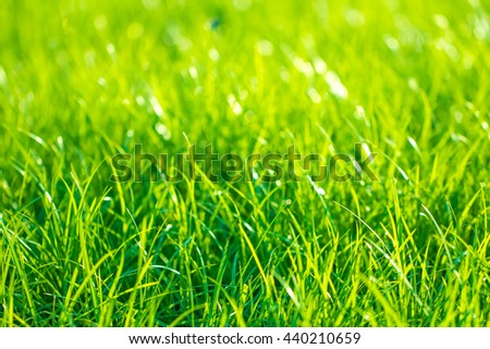 Abstract natural backgrounds grass