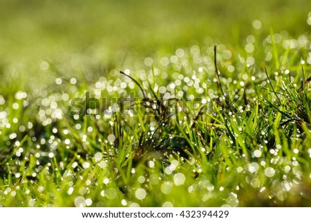 Abstract natural backgrounds grass, bokeh green nature background.