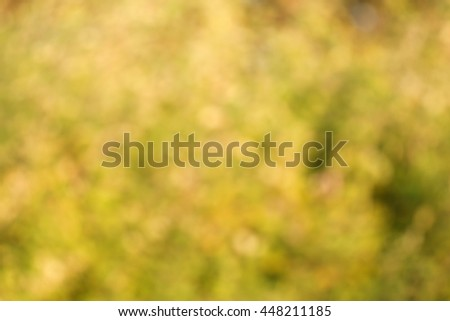 Abstract natural backgrounds grass in gold for wallpaper  - stock photo