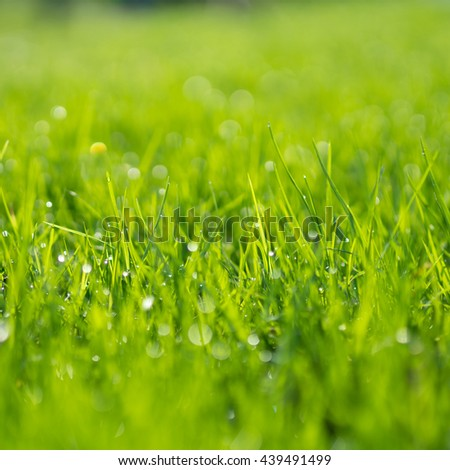 Abstract natural backgrounds of green grass and beauty blurred bokeh. Selective focus close up shot for abstract blurred in shot.. - stock photo