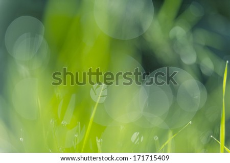 Abstract natural backgrounds with beauty - stock photo