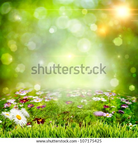 Abstract natural backgrounds with chamomile flowers - stock photo