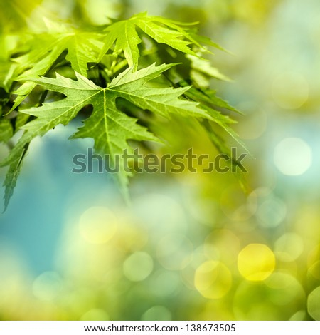 Abstract natural backgrounds with maple foliage