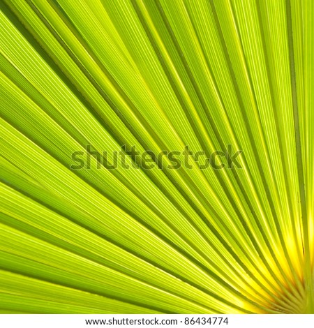 Abstract natural pattern created by palm leaf. - stock photo