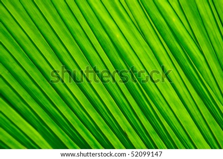 Abstract nature background, green palm leaves