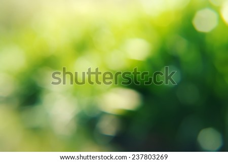 abstract nature background not in sharpness, a series of images - stock photo