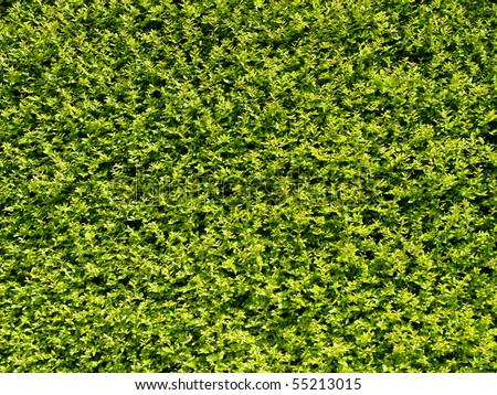Abstract Nature Background of a Garden Hedge - stock photo