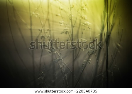 Abstract nature background with wild flowers and plants silhouettes at foggy mysterious sunrise. Early morning over the meadow at misty autumn. Blur effect