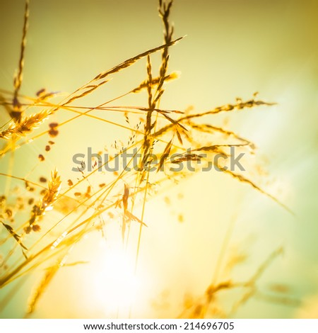 Abstract nature floral background in vintage style. Amazing sunrise at summer meadow with wildflowers under golden sky - stock photo