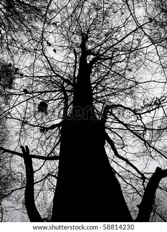 Abstract Nature - Low Angle View Silhouette of a Bare Wintry Tree in Black and White - stock photo