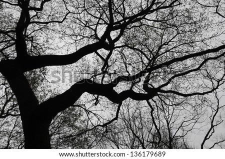 Abstract Nature Silhouette of a Tree - stock photo