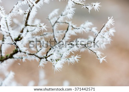 Abstract nice twig with frost - stock photo