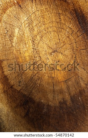 Abstract  of a tree trunk with beautiful golden shades. - stock photo