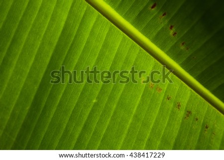 Abstract of banana leaf background - stock photo