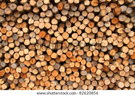 abstract of eucalyptus trees for lumber industry.