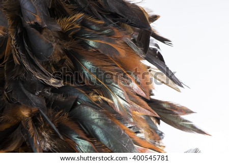 Abstract of feather on white background