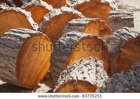 Abstract of Freshly Cut Pine Logs in the Afternoon Sunshine. - stock photo