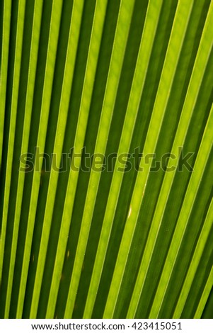 Abstract of green palm leaf