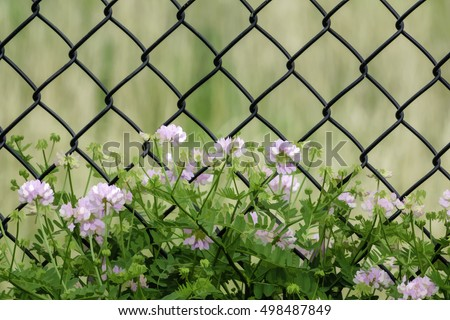 Chain Link Fence Stock Photos Royalty Free Images