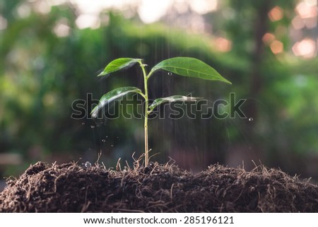 abstract of watering young tree over green background - stock photo