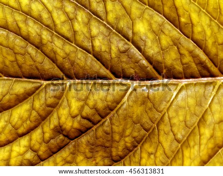 Abstract orange leaf texture. Natural background and texture. - stock photo