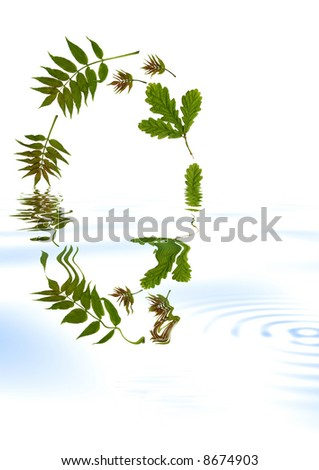 Abstract oval arrangement of oak and ash leaves reflected in water. Set against a white background.