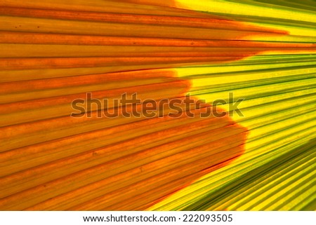 abstract palm leaf - stock photo