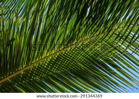 Abstract Palm tree branch on the tropical beach for background