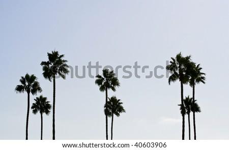 Abstract Palm Tree Shot - stock photo