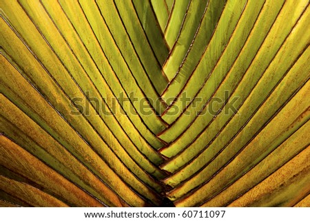 Abstract pattern of Palm Leaves - stock photo